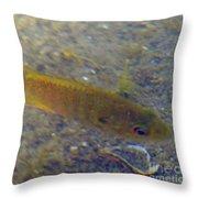 Fish Sandy Bottom Throw Pillow