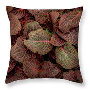 Fittonia Throw Pillow