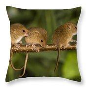 Five Eurasian Harvest Mice Throw Pillow