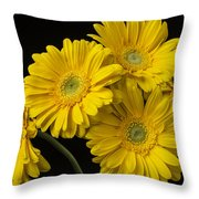 Five Gerbera Daisies Throw Pillow