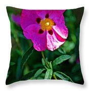 Orchid Rock Rose At Pilgrim Place In Claremont-california  Throw Pillow