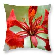 Flamboyant Beauty Throw Pillow