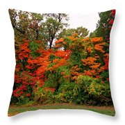 Flamboyant Forest Throw Pillow
