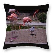 Flamgos 3 San Diego Zoo Throw Pillow