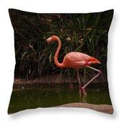 Flamingo 1 San Diego Zoo Throw Pillow
