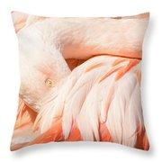 Flamingo Abstract Throw Pillow