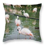 Flamingo Bath  Throw Pillow