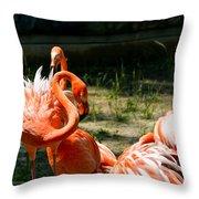 Flamingo Colony Throw Pillow