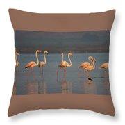 Flamingo During Sunset Throw Pillow