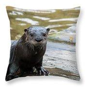 Flamingo Gardens - Curious Otter Throw Pillow
