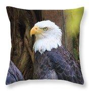Flamingo Gardens - Focused Bald Eagle Throw Pillow