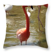 Flamingo II Throw Pillow