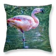 Flamingo In Still Waters Throw Pillow