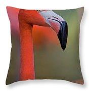 Flamingo Portrait - Sacramento Zoo Throw Pillow