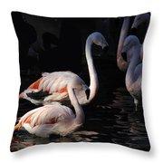 Flamingo Study - 2 Throw Pillow