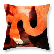 Flamingo Taking A Dip Throw Pillow