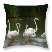 Flamingoes And Their Reflections Throw Pillow
