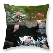Flamingoes At The Zoo Throw Pillow
