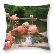 Flamingoes Looking Oh So Pretty  Throw Pillow