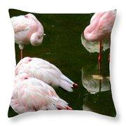 Flamingos 10 Throw Pillow