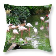 Flamingos 4 Throw Pillow