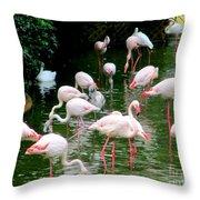 Flamingos 6 Throw Pillow