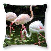 Flamingos 8 Throw Pillow