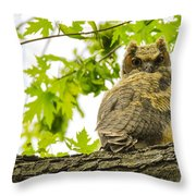 Fledgling Great Horned Owl Throw Pillow