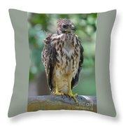 Fledgling Hawk Throw Pillow