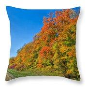 Fleeting Beauty Throw Pillow