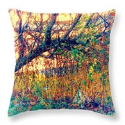Fletcher Lake  14 Throw Pillow