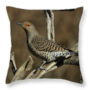 Flicker On Cedar Throw Pillow