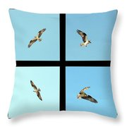 Flight Of The Osprey Throw Pillow