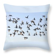 Flight Of The White Ibis Throw Pillow