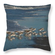 Flock Of Sanderlings Throw Pillow