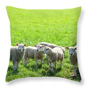 Flock Of Sheep Standing In A Field Waiting Throw Pillow