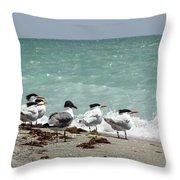Flock Of Terns Gp Throw Pillow
