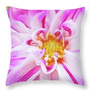 Floral Art Prints Big Pink White Dahlia Flower Baslee Troutman Throw Pillow