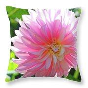 Floral Art Prints Pink Dahlias Sunlit Baslee Troutman Throw Pillow