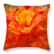 Floral Rhodies Art Prints Orange Rhododendrons Canvas Art Baslee Troutman Throw Pillow