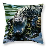 Florida Alligator Throw Pillow