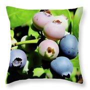 Florida - Blueberries - On The Bush Throw Pillow