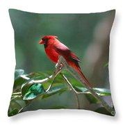 Florida Cardinal Throw Pillow