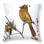 Florida Cardinal Throw Pillow