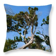 Florida Cedar Tree Throw Pillow