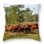 Florida Cracker Cows #1 Throw Pillow
