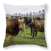 Florida Cracker Cows #2 Throw Pillow