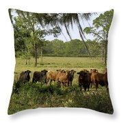 Florida Cracker Cows #3 Throw Pillow