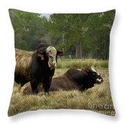 Florida Cracker Cows #4 Throw Pillow