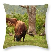 Florida Cracker Cows And Osceola Turkeys #2 Throw Pillow